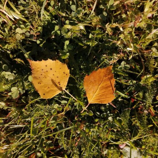 Lehdet kuvituskuva